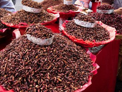 Además del maíz, los insectos eran parte fundamental de la comida prehispánica