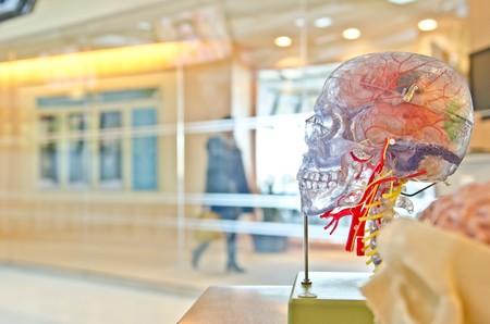Si los huesos fueran transparentes, veríamos que llevan sangre: descubren una nueva red circulatoria que atraviesa los huesos