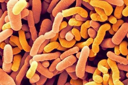 bifidobacterium-bifidus