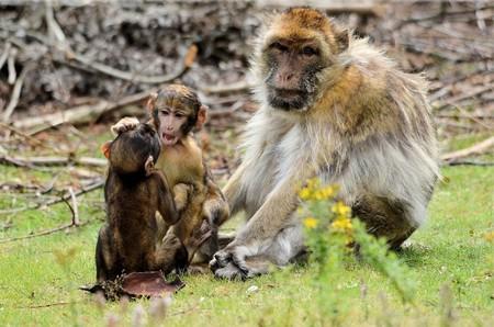 Experimentos con monos