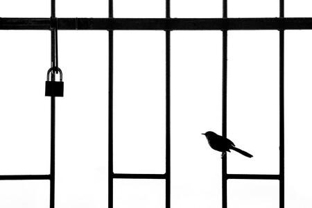 Web Urbanbirds Silver Williamsteel