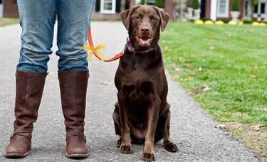 The Yellow Dog Project: precaución ante perros con un listón amarillo