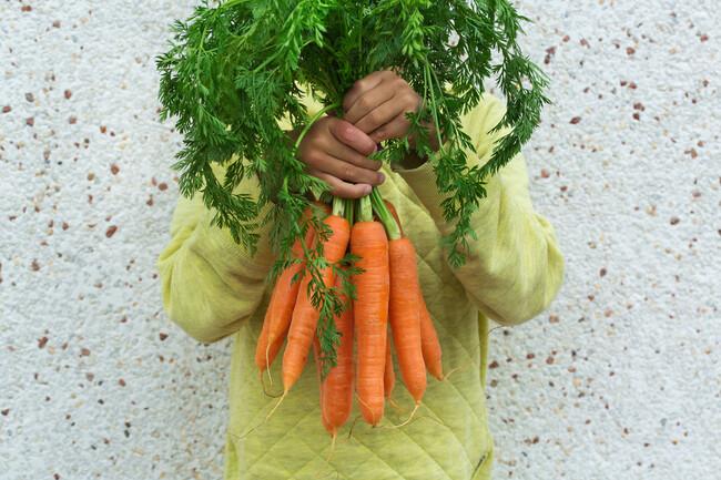 Nuestras Mejores 47 Recetas Con Zanahoria La zanahoria es una planta bienal, es decir tiene una vida de 2 años. nuestras mejores 47 recetas con zanahoria