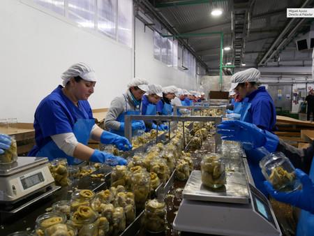 El secreto de las conservas saludables: cómo funciona una fábrica de envasado de verduras