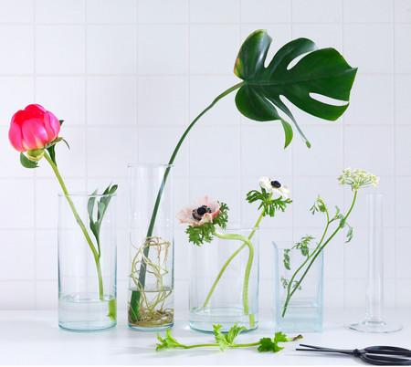 Floresyplantas