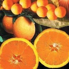 I Semana Cultural de la Naranja en Alcuéscar