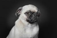 A Dog's Life nos muestra el lado más humano de los perros