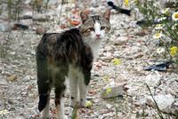 Se abre la primera cafetería felina en España