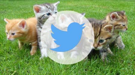 Twitter quiere que compartir GIFs sea más fácil: sus apps para móvil incorporarán un motor de búsqueda
