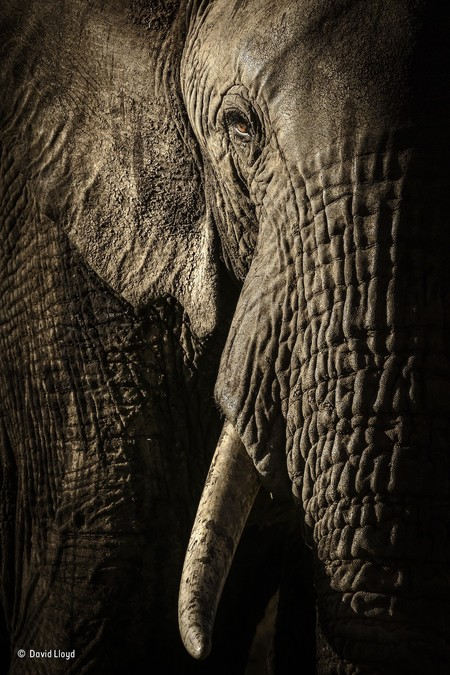 The Power Of The Matriarch David Lloyd Wildlife Photographer Of The Year