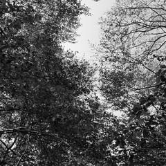 Foto 3 de 8 de la galería moto-z2-force-fotografias-en-blanco-y-negro en Xataka