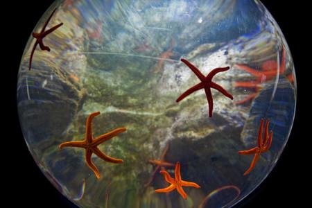 Acuario Donostia Estrellas