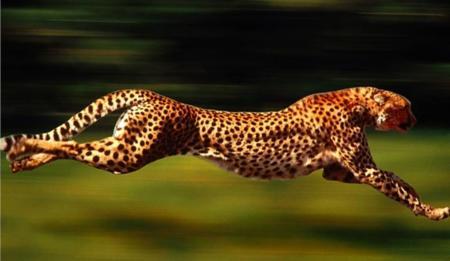 La carrera 4G: Una ventaja competitiva