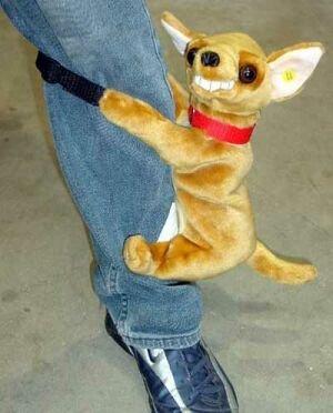 Humphrey, el perrito vicioso
