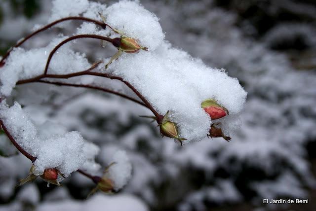 El jardín de Bemi en invierno