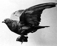 En algunas zonas rurales, las palomas mensajeras son más rápidas que la banda ancha