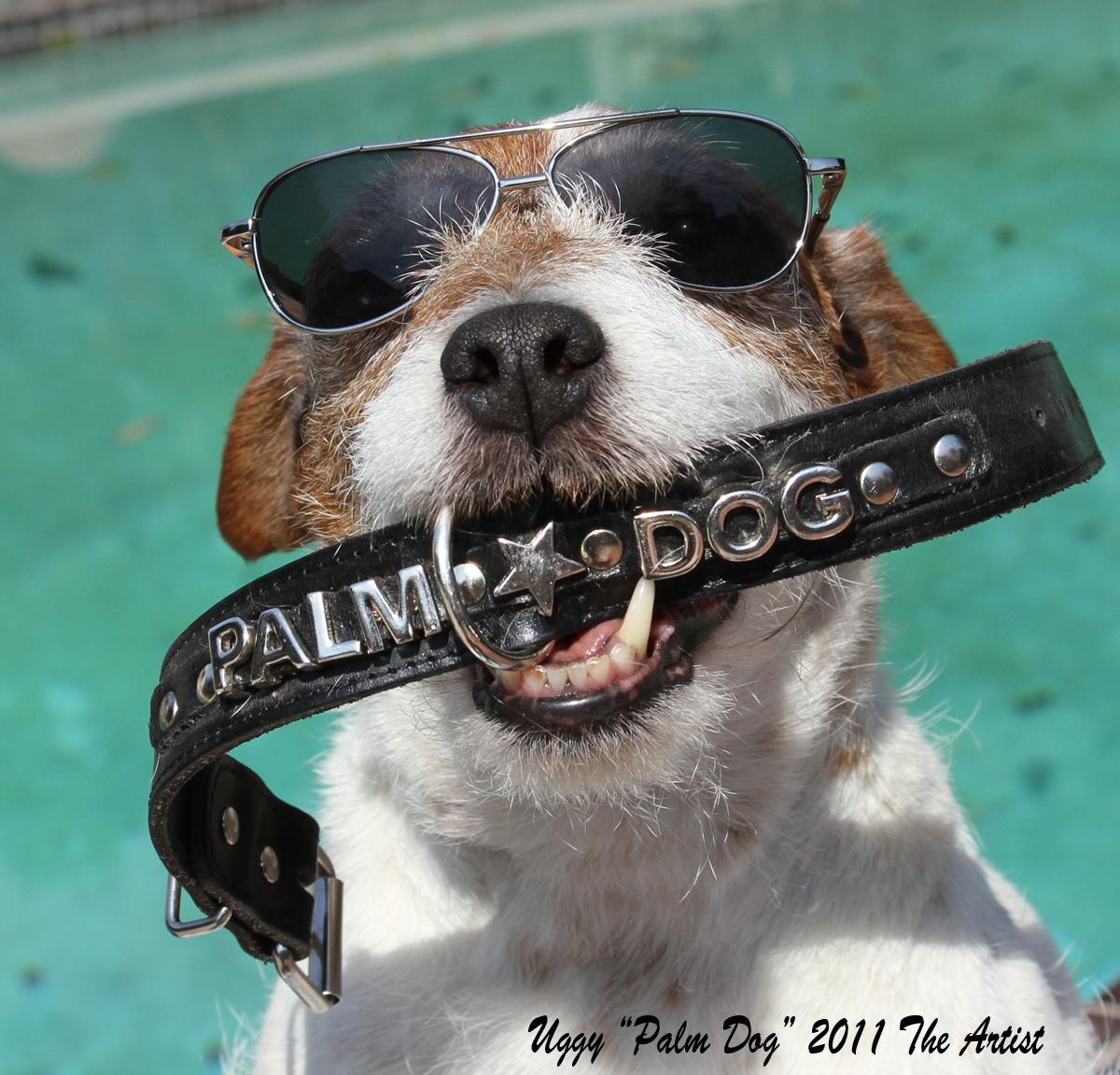 Foto de Fotos de Uggie, el perro de 'The Artist' (4/8)