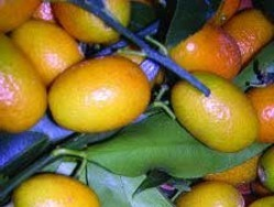El kumquat, un cítrico de cáscara comestible