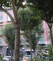 Nápoles toma la delantera contra el tabaco