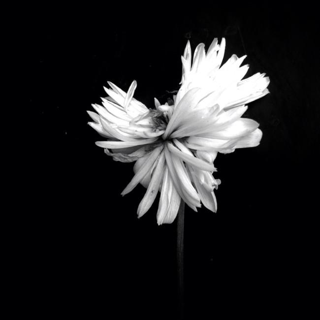 018 Amo Passicos Flowers 2nd
