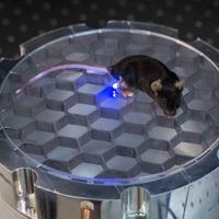 La optogenética en acción: pequeños LEDs inalámbricos en ratones permiten controlar sus neuronas
