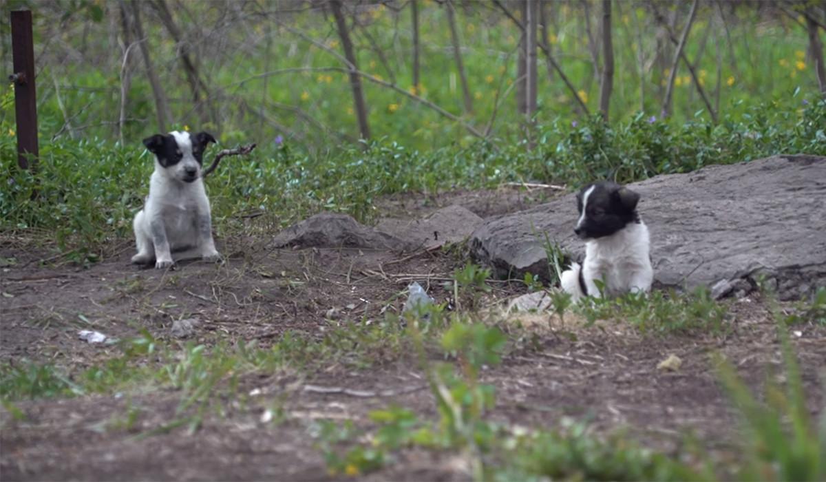 Chernóbil se ha llenado de adorabilísimos cachorritos radioactivos a los que no puedes acariciar