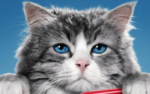 Siete vidas, este gato es un peligro para el cine