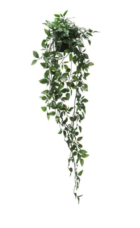 Plantas Colgante
