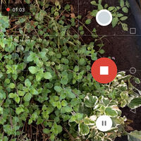 Cámara de Google 4.4, novedades: flash para selfies, doble tap para hacer zoom y más novedades