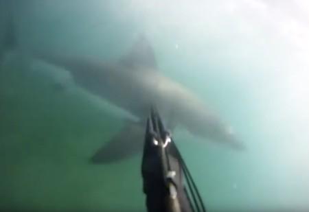El vídeo que muestra el terror de ser atacado por un tiburón blanco