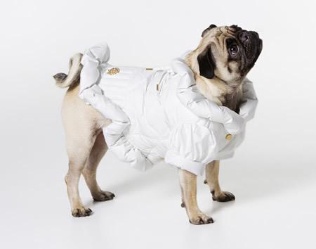 Roberto Cavalli diseña una nueva línea de ropa para tu mascota