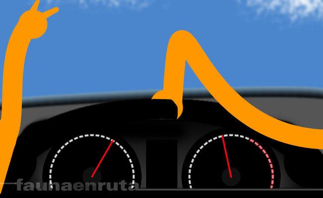 fauna en ruta: coger el volante