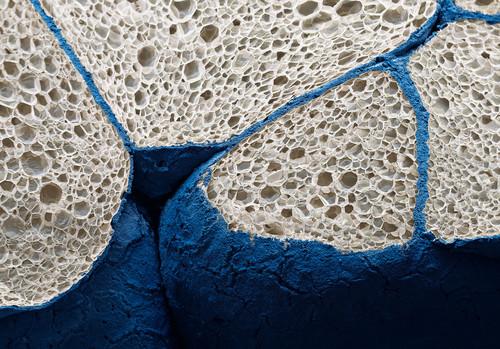 33 bellísimas imágenes de objetos bajo el microscopio  que son fondos de pantalla perfectos