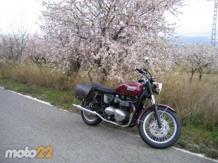 Prueba Triumph Bonneville 2008 (2)