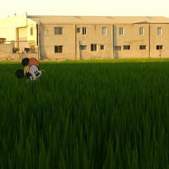 Foto 25 de 34 de la galería fotos-con-el-asus-zenfone-ar en Xataka