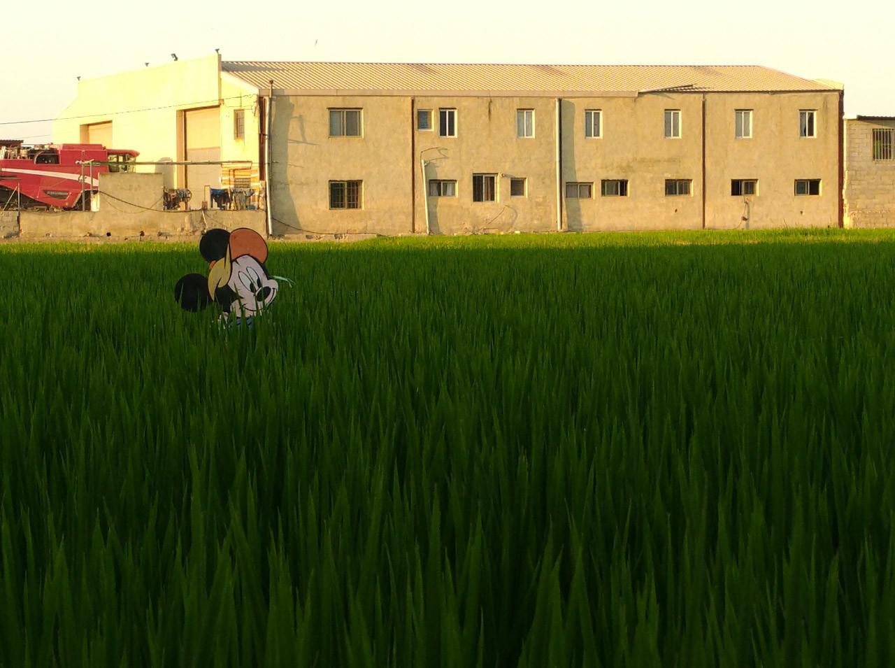 Fotos con el ASUS ZenFone AR