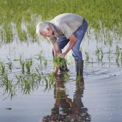 Foto 2 de 14 de la galería la-produccion-de-los-cereales-con-base-de-arroz en Vitónica