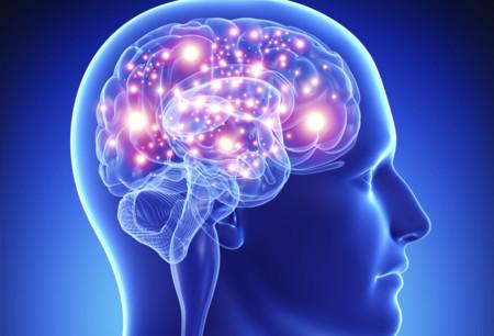 Investigadores mexicanos previenen la pérdida de neuronas en caso de infarto cerebral