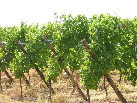 Produccion Vino1