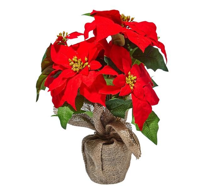 Planta Flor de Pascua Navidad El Corte Inglés
