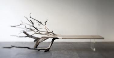 Un árbol caído que realmente es un banco