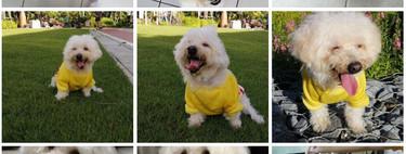 Cómo crear collages y animaciones en Google Fotos