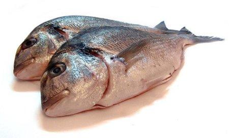 Calendario de pescados de temporada para conseguir mejor precio y calidad