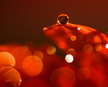 Siete Conceptos básicos para la realización de fotografía macro