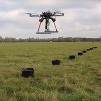 El ser humano lleva años deforestando los bosques. Y ahora los drones tienen que volver a plantarlos