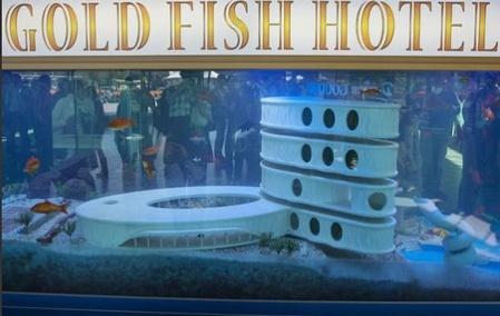 Gold Fish Hotel2