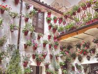 Visita a los patios de Córdoba