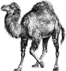 Perl 5.14 ya disponible: mejor soporte de Unicode y de IPv6