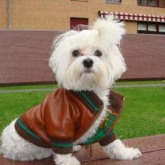 Foto 5 de 6 de la galería the-puppi-catwalk en Trendencias