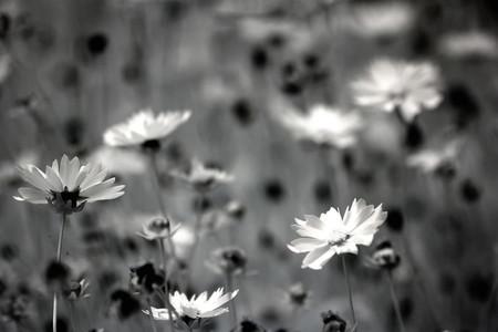Trucos Mejores Fotos Flores 12
